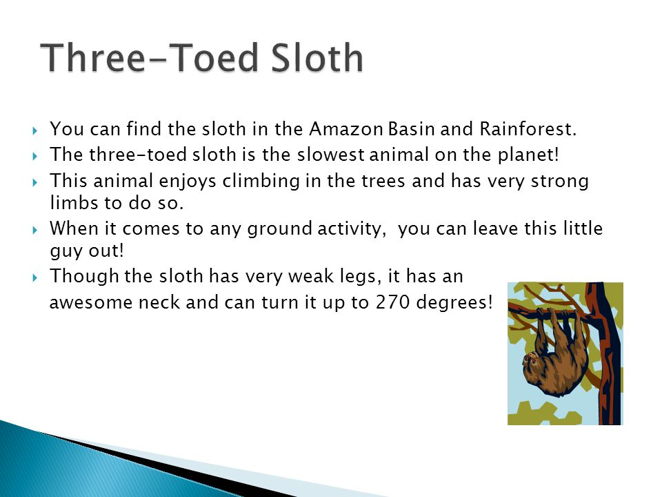  You can find the sloth in the Amazon Basin and Rainforest.  The three-toed sloth is the slowest animal on the planet!  This animal enjoys climbing