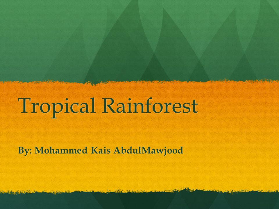 The 3 parts The tropical rainforest has the parts.