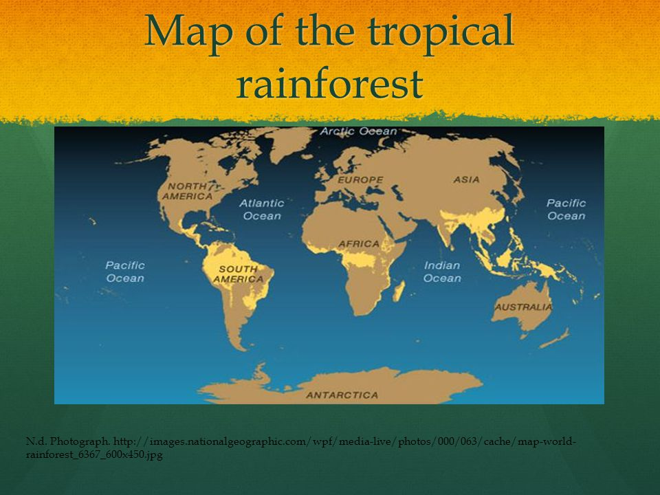 What are some animals in the tropical rainforest.Some of the animals of the rainforest is: 1.