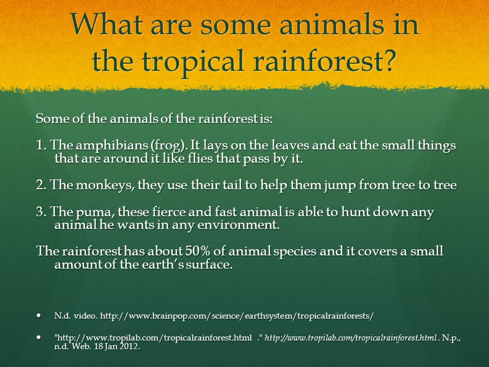 What are some plants that live in the tropical rainforest The following plants will be found in the tropical rainforest: The following plants will be found in the tropical rainforest: 1.You can find a lot of tress easily.