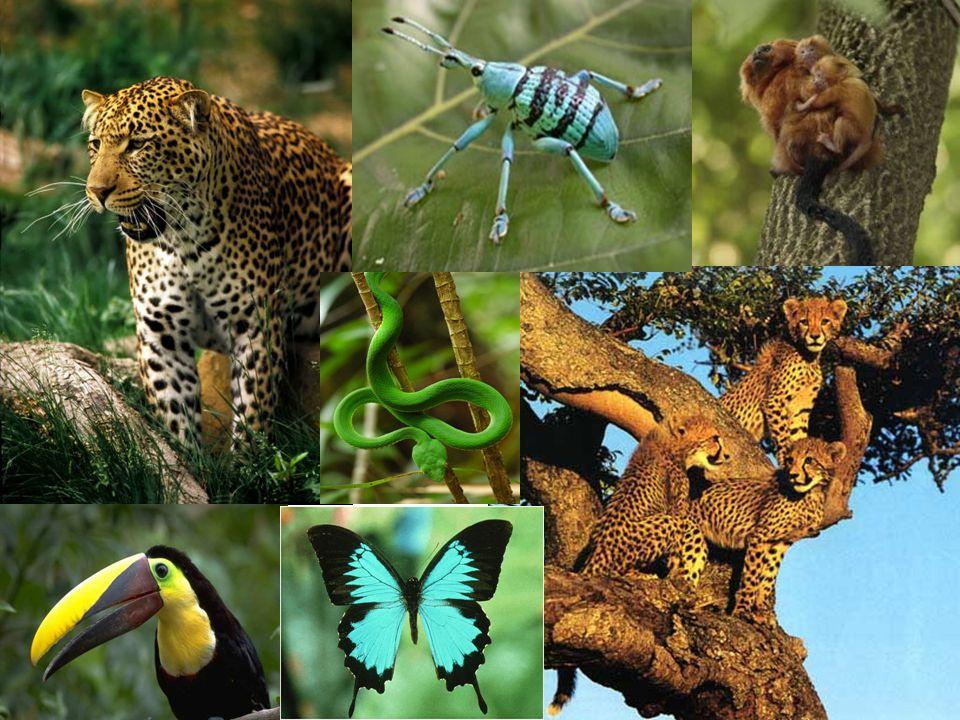 Bibliography http://www.yoyita.com/Flora_Nicaragua/red- flowers-02-01.jpg http://www.yoyita.com/Flora_Nicaragua/red- flowers-02-01.jpg http://3.bp.blogspot.com/_Tq1Bk9hOCHs/Ru- 2pnGHT3I/AAAAAAAAABE/wmG9VzeSK0g/s32 0/rainforest.jpg http://3.bp.blogspot.com/_Tq1Bk9hOCHs/Ru- 2pnGHT3I/AAAAAAAAABE/wmG9VzeSK0g/s32 0/rainforest.jpg http://www.wallcoo.net/nature/bamboo_fore st/images/%5Bwallcoo_com%5D_bamboos_G A112.jpg http://www.wallcoo.net/nature/bamboo_fore st/images/%5Bwallcoo_com%5D_bamboos_G A112.jpg