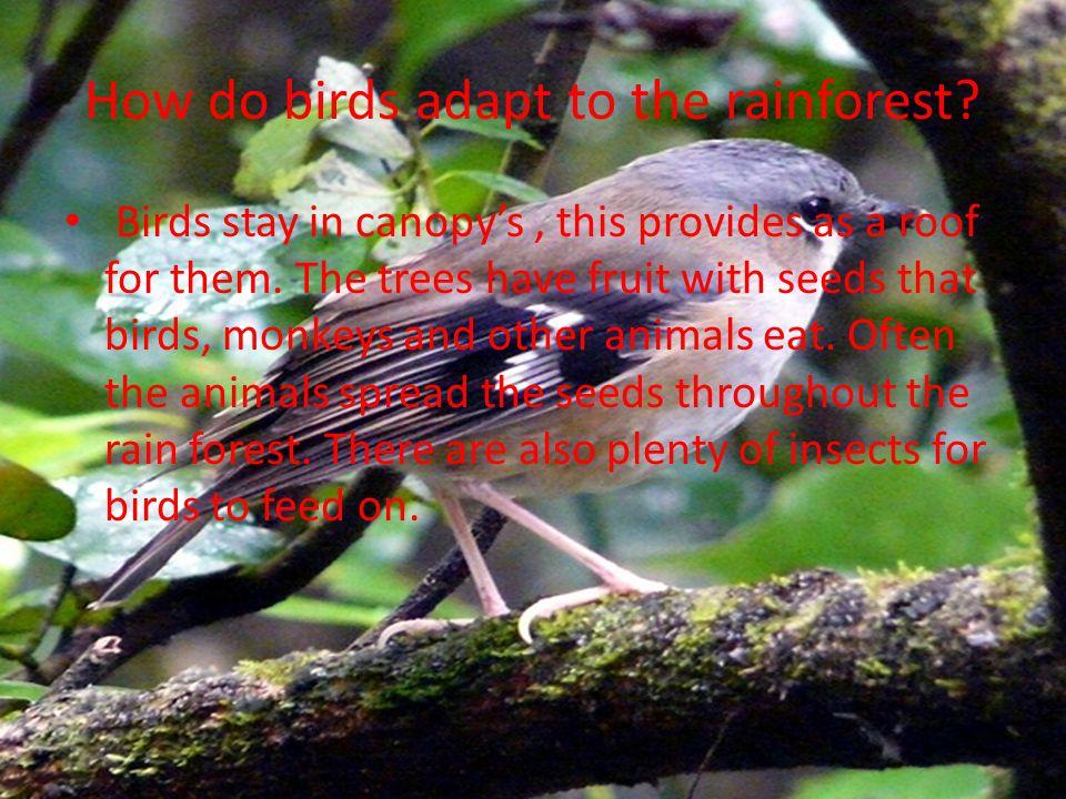 Abiotic factors and human activities We will tell you about the abiotic factors and the human activities NOW !