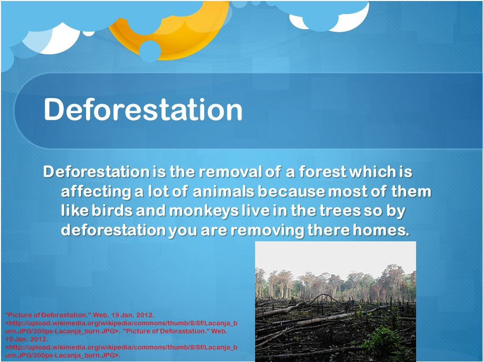 Deforestation Deforestation is the removal of a forest which is affecting a lot of animals because most of them like birds and monkeys live in the trees so by deforestation you are removing there homes.