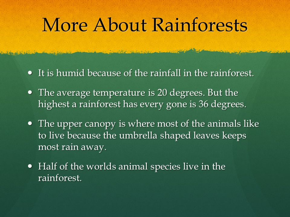 More About Rainforests It is humid because of the rainfall in the rainforest. It is humid because of the rainfall in the rainforest. The average tempe