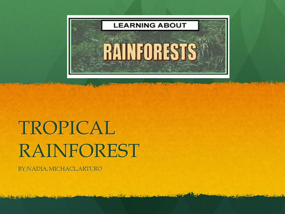 WHERE ARE TROPICAL RAINFOREST'S.They are found They are found In South America,Asia and Africa.