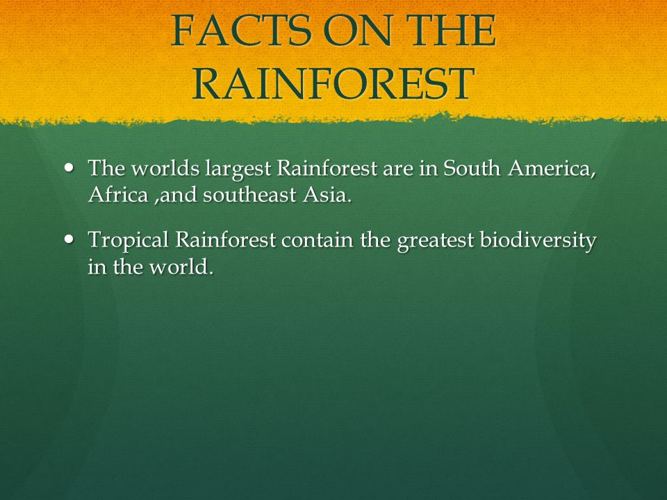 FACTS ON THE RAINFOREST The worlds largest Rainforest are in South America, Africa,and southeast Asia.