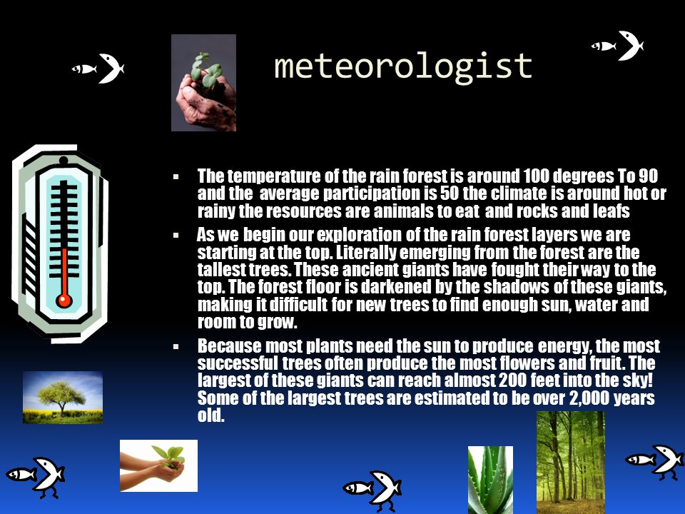 Meteorologist What is the climate like in the biome.