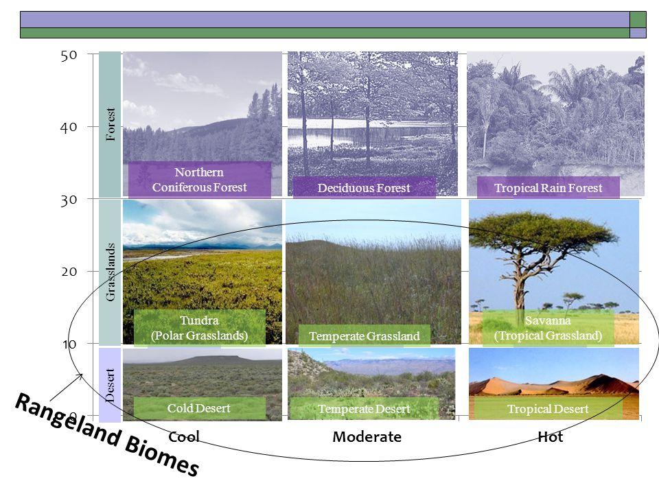 Desert Grasslands Forest Cold Desert Temperate Desert Tundra (Polar Grasslands) Temperate Grassland Savanna (Tropical Grassland) Tropical Rain Forest Tropical Desert Northern Coniferous Forest Deciduous Forest Rangeland Biomes