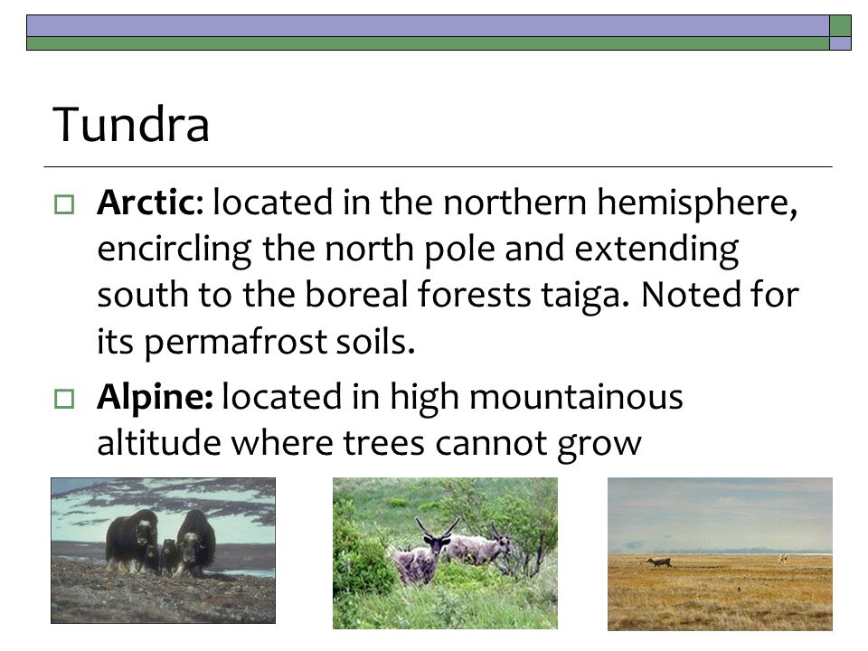 Tundra  Arctic: located in the northern hemisphere, encircling the north pole and extending south to the boreal forests taiga.