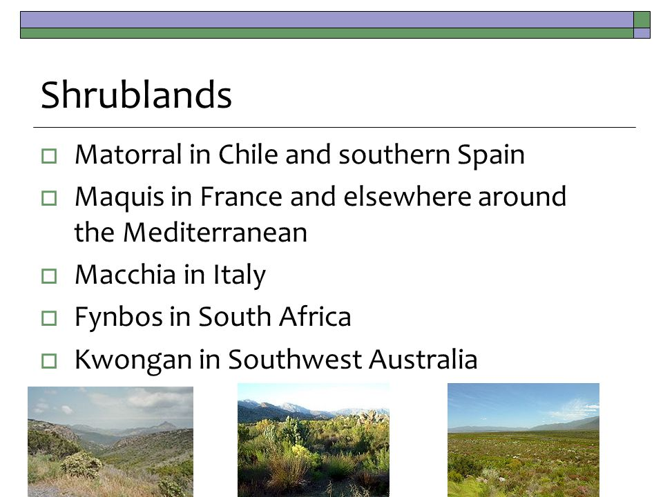 Shrublands  Matorral in Chile and southern Spain  Maquis in France and elsewhere around the Mediterranean  Macchia in Italy  Fynbos in South Africa  Kwongan in Southwest Australia