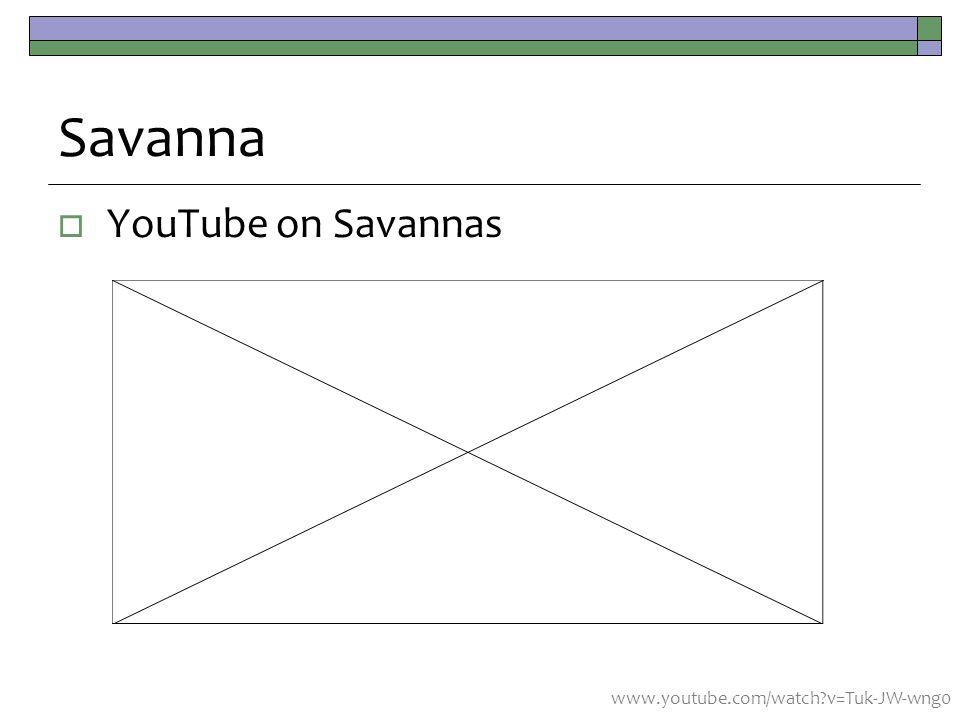 Savanna  YouTube on Savannas www.youtube.com/watch v=Tuk-JW-wng0