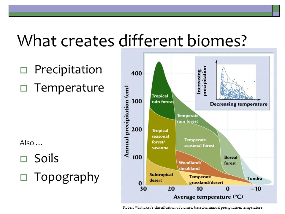  Precipitation  Temperature Also …  Soils  Topography What creates different biomes? Robert Whittaker's classification of biomes, based on annual