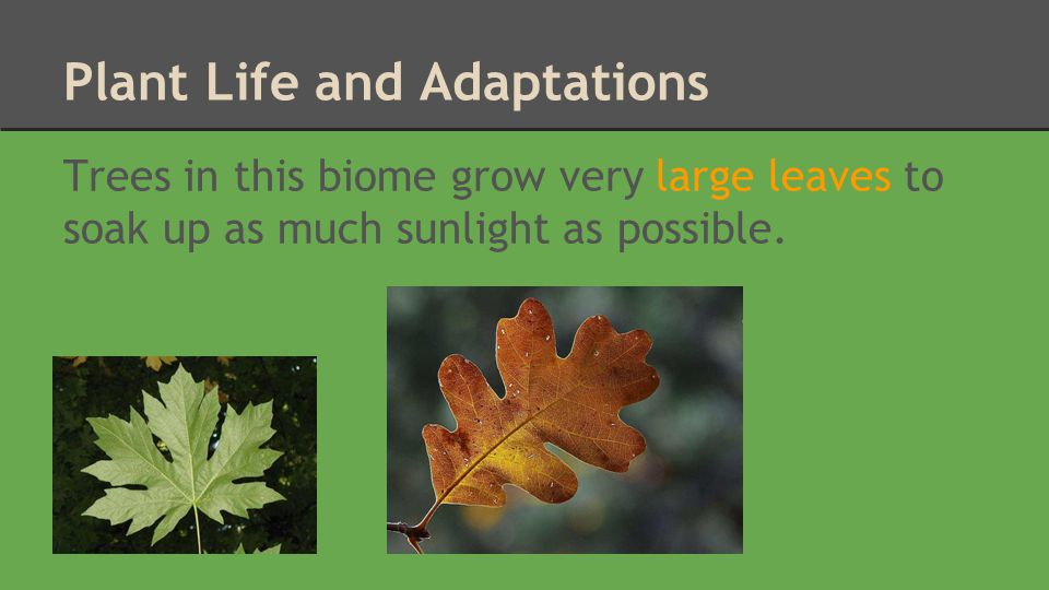Plant Life and Adaptations Trees produce sap during the winter to keep their roots from freezing.