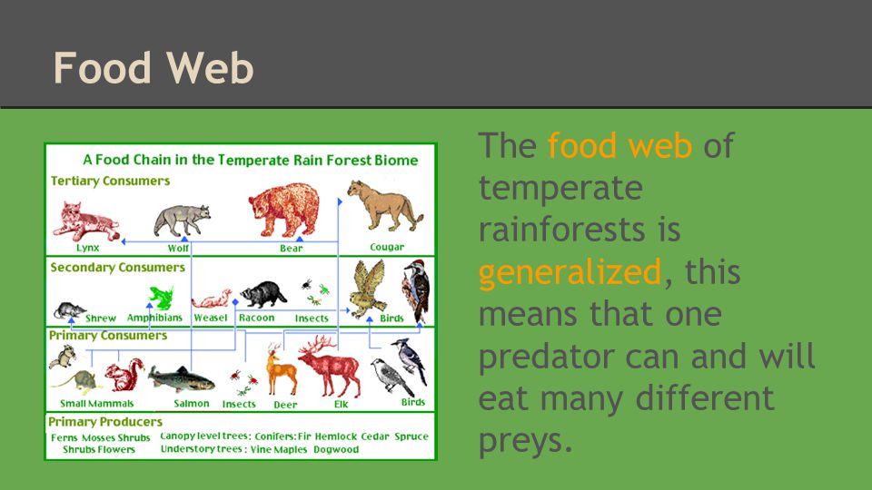 Wildlife and Adaptations The banana slug is the second largest slug in the world.