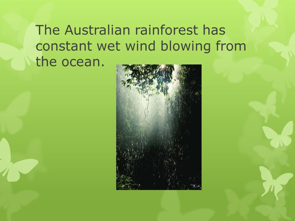 The Australian rainforest has constant wet wind blowing from the ocean.