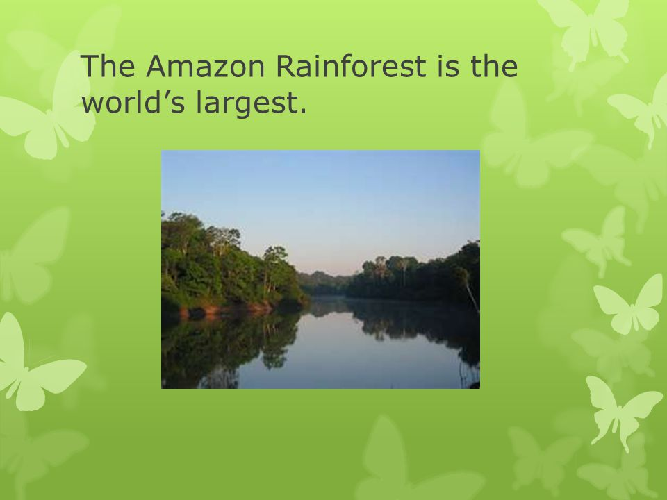 What are some of the animals that live in the Rainforest?
