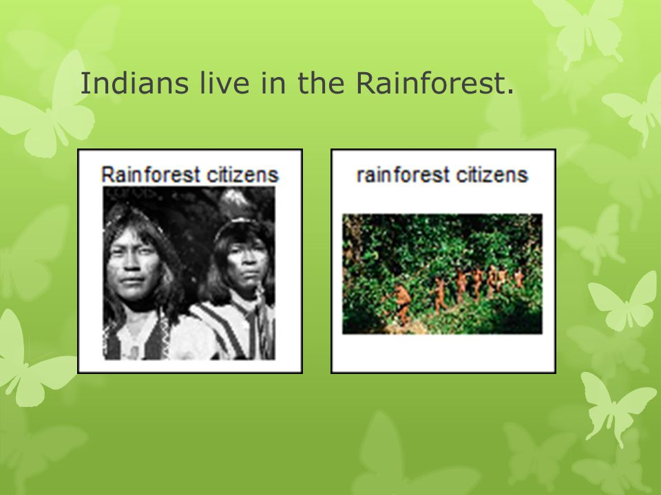 The people of the Rainforest are hunters and gatherers.