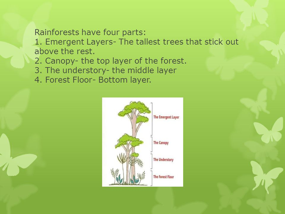 Rainforests have four parts: 1. Emergent Layers- The tallest trees that stick out above the rest.