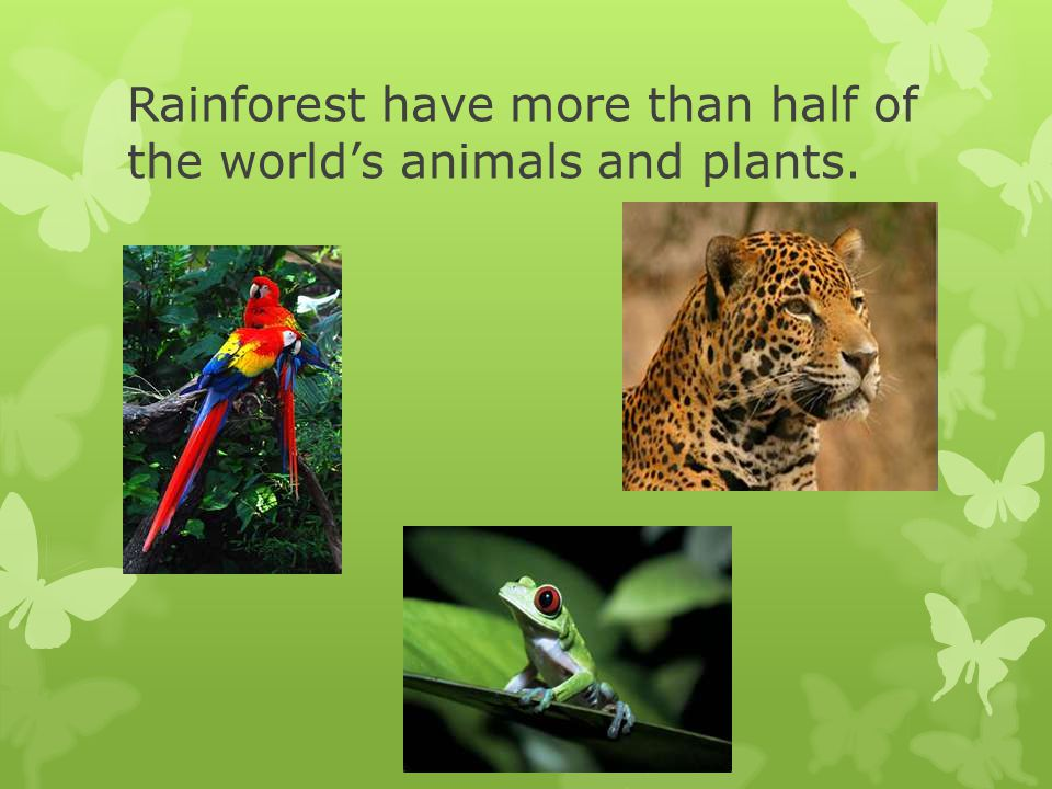 There are five Rainforest in the World.