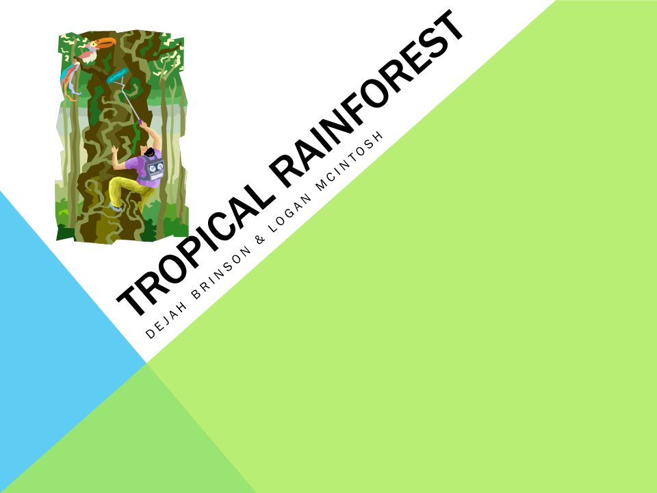 TROPICAL RAINFOREST DEJAH BRINSON & LOGAN MCINTOSH