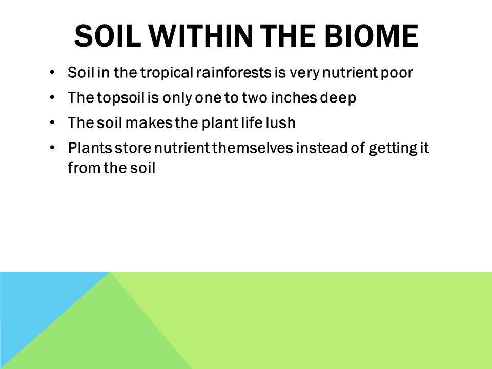 SOIL WITHIN THE BIOME Soil in the tropical rainforests is very nutrient poor The topsoil is only one to two inches deep The soil makes the plant life lush Plants store nutrient themselves instead of getting it from the soil
