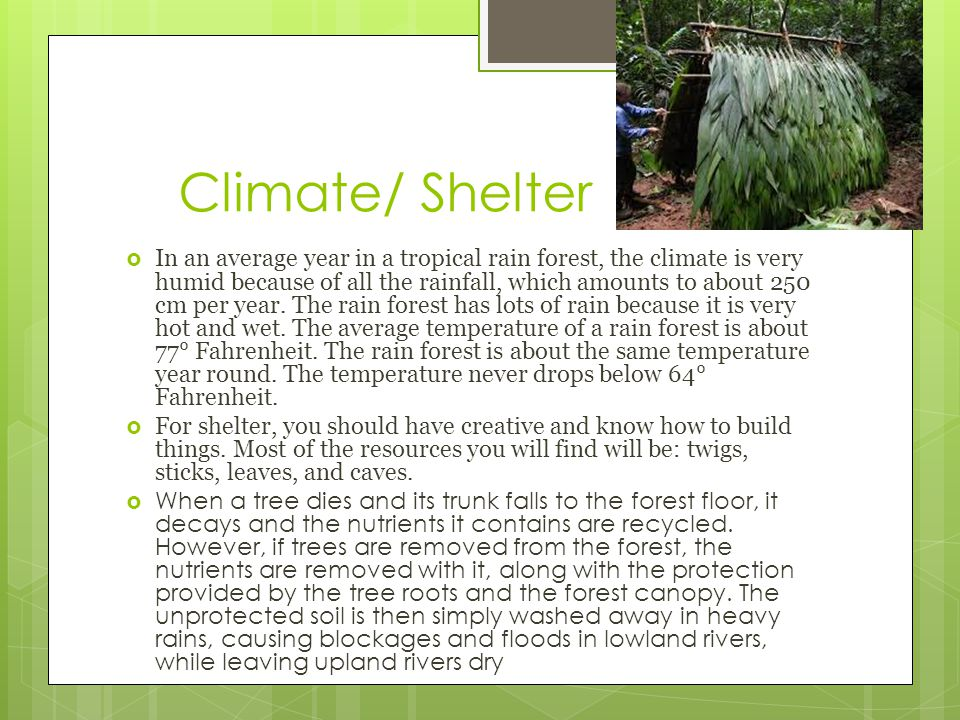 Climate/ Shelter  In an average year in a tropical rain forest, the climate is very humid because of all the rainfall, which amounts to about 250 cm per year.