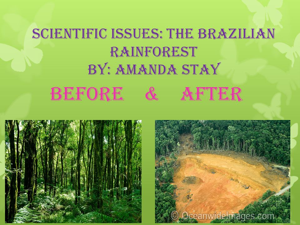 Scientific issues: The Brazilian Rainforest By: Amanda Stay Before & After