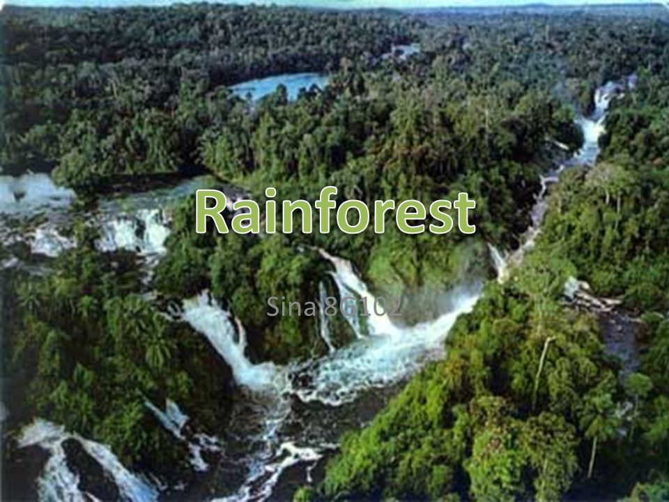 Why: Tropical rainforests took between 60 and 100 million years to form and are believed to be the oldest and most complex land-based ecosystem on earth, having over 30 million species of flora and fauna which is half of the world wildlife.
