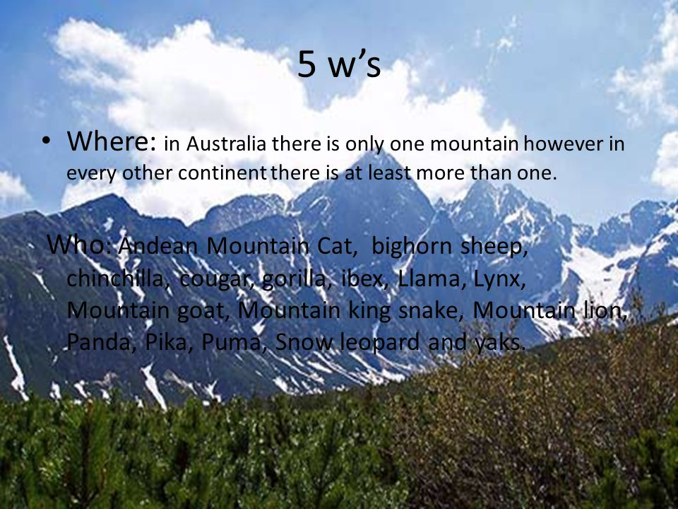5 w's Where: in Australia there is only one mountain however in every other continent there is at least more than one. Who : Andean Mountain Cat, bigh