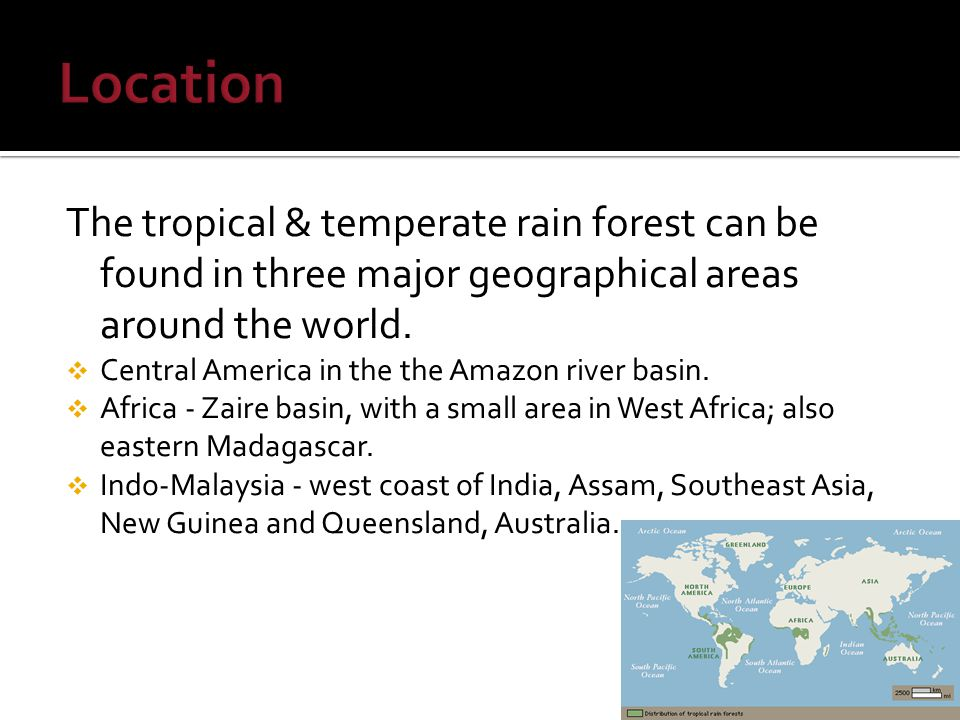 The tropical & temperate rain forest can be found in three major geographical areas around the world.
