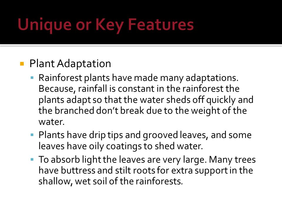  Plant Adaptation  Rainforest plants have made many adaptations.