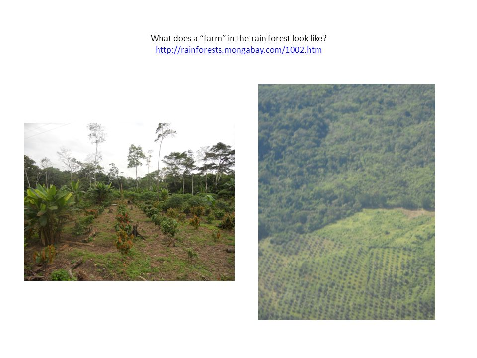How does development of the rainforest help the people who live there.