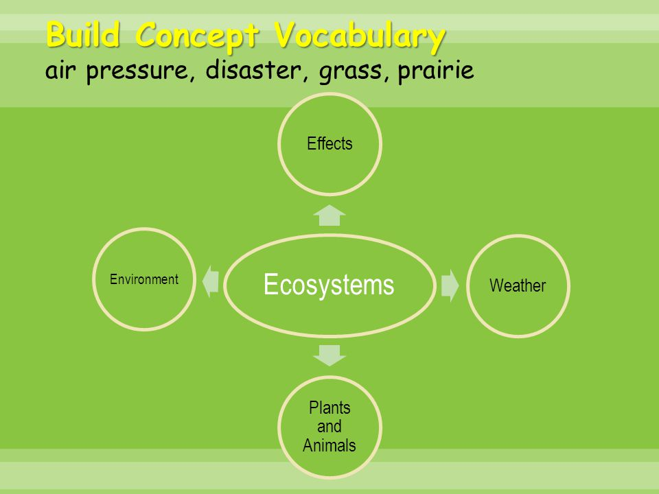 Ecosystems EffectsWeather Plants and Animals Environment