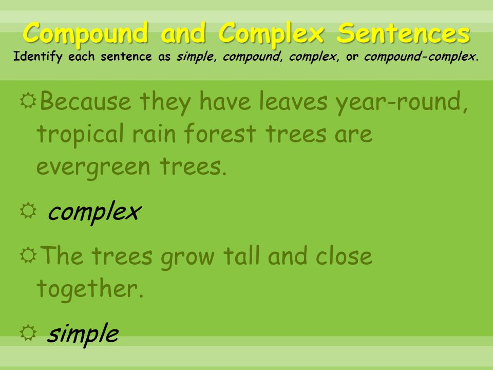  Because they have leaves year-round, tropical rain forest trees are evergreen trees.  complex  The trees grow tall and close together.  simple