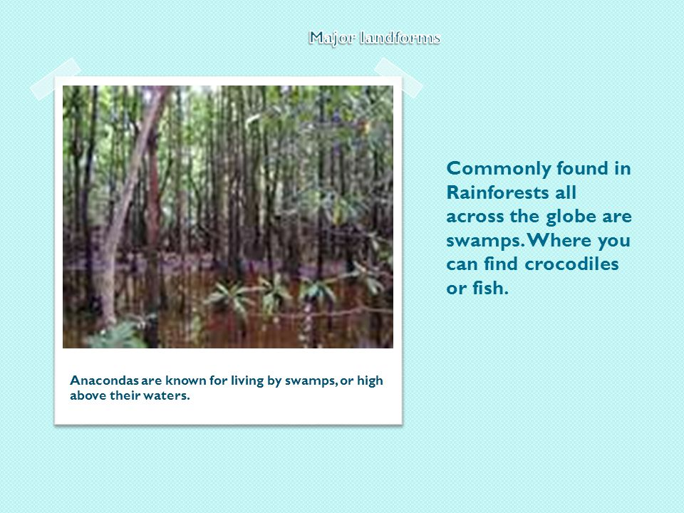 Commonly found in Rainforests all across the globe are swamps.