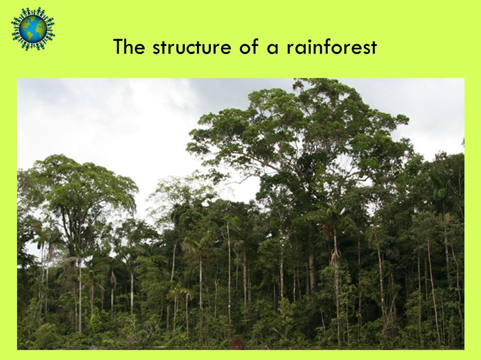 The structure of a rainforest