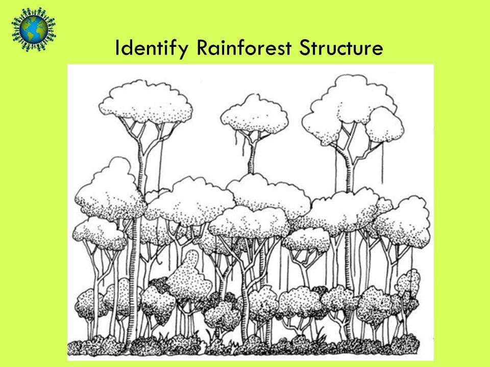 Identify Rainforest Structure