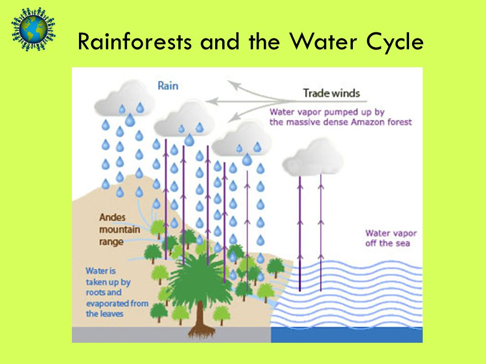 Rainforests and the Water Cycle