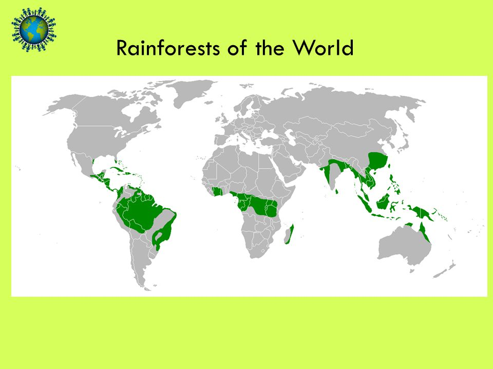 Rainforests are found on the Equator