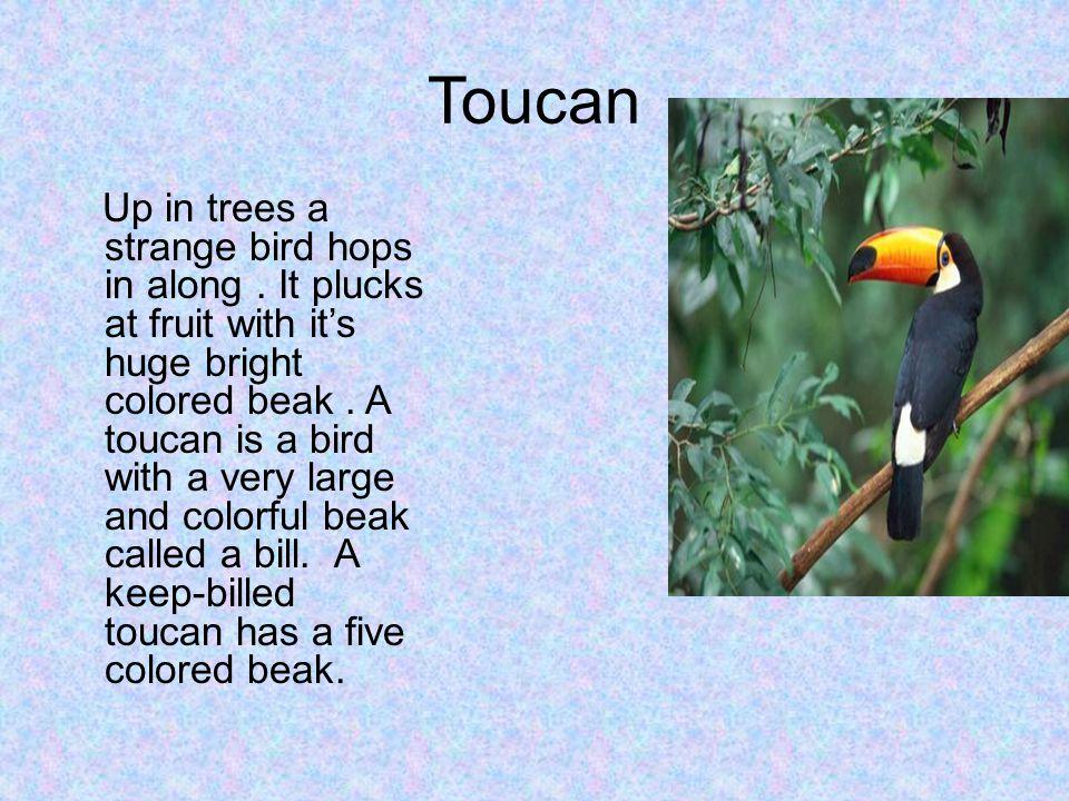 Toucan Up in trees a strange bird hops in along.