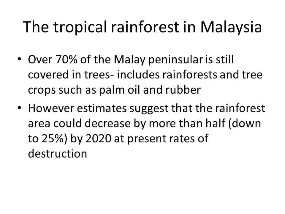 The tropical rainforest in Malaysia Over 70% of the Malay peninsular is still covered in trees- includes rainforests and tree crops such as palm oil and rubber However estimates suggest that the rainforest area could decrease by more than half (down to 25%) by 2020 at present rates of destruction