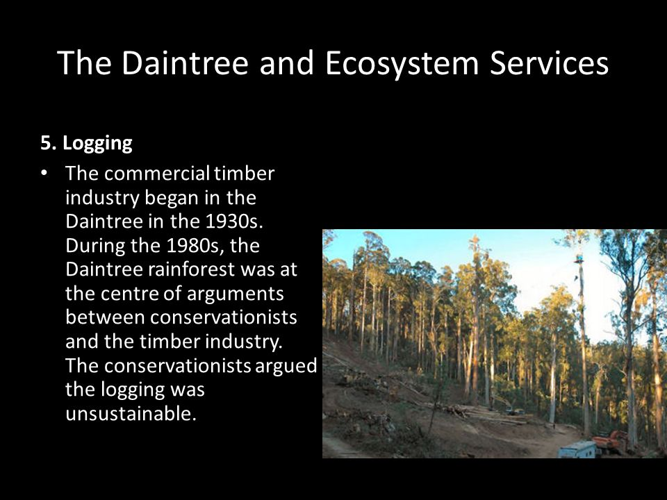 The Daintree and Ecosystem Services 5. Logging The commercial timber industry began in the Daintree in the 1930s. During the 1980s, the Daintree rainf