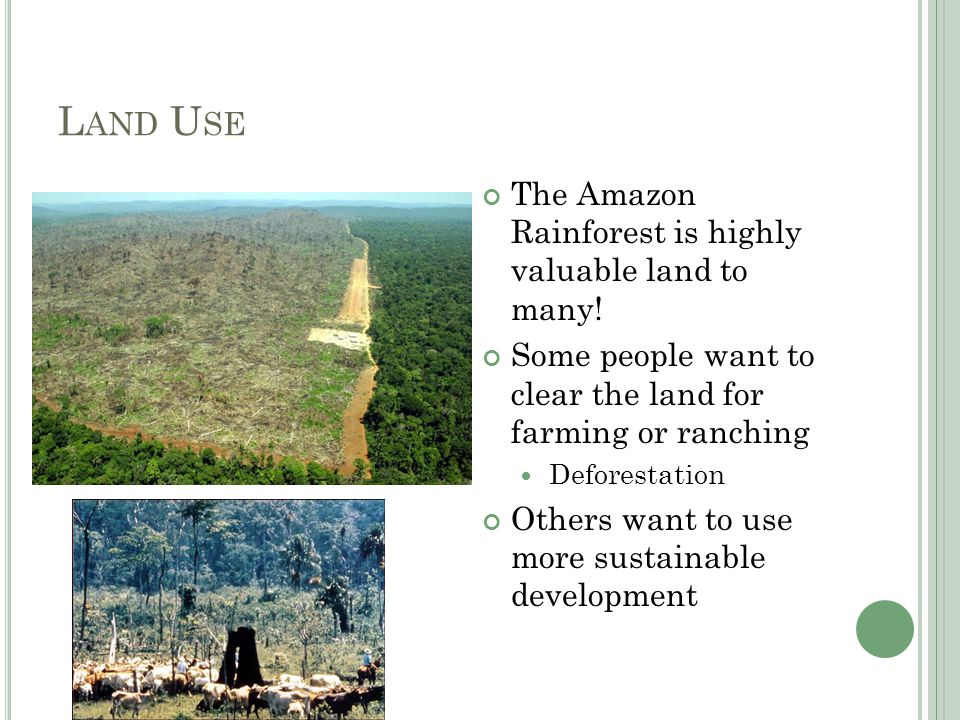 L UNGS OF THE E ARTH Rainforests play a key role in the carbon- oxygen cycle Many fear that if too much of the rainforest (the Amazon and around the world) are lost the cycle will be interrupted