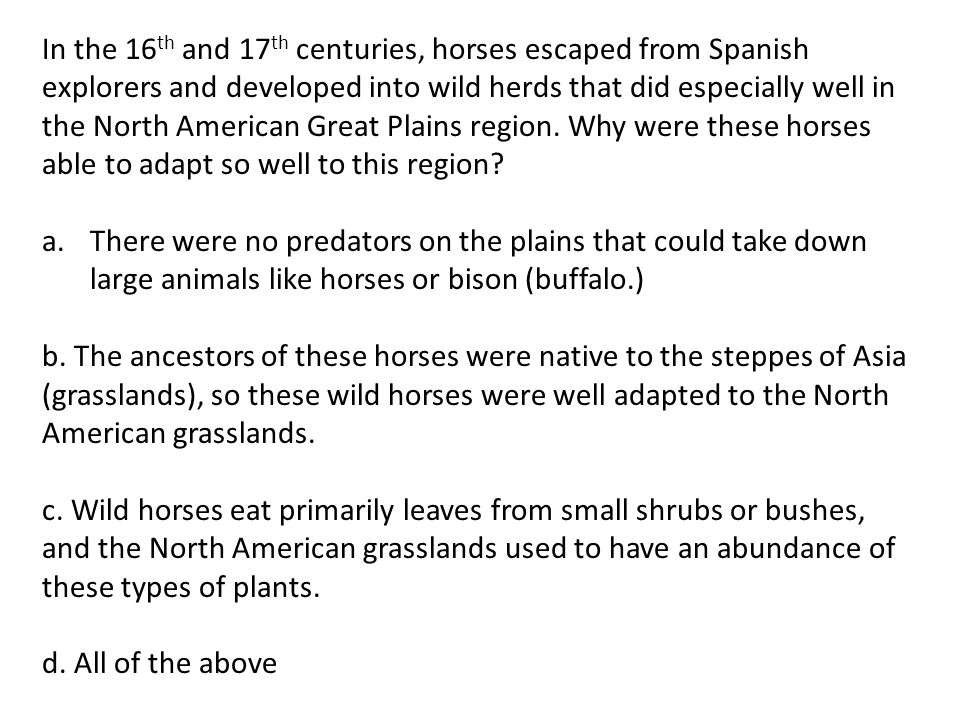 In the 16 th and 17 th centuries, horses escaped from Spanish explorers and developed into wild herds that did especially well in the North American G
