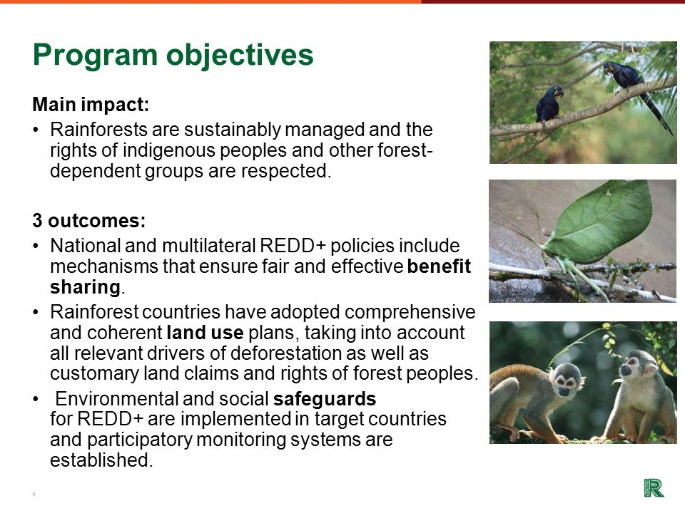 Program objectives Main impact: Rainforests are sustainably managed and the rights of indigenous peoples and other forest- dependent groups are respected.