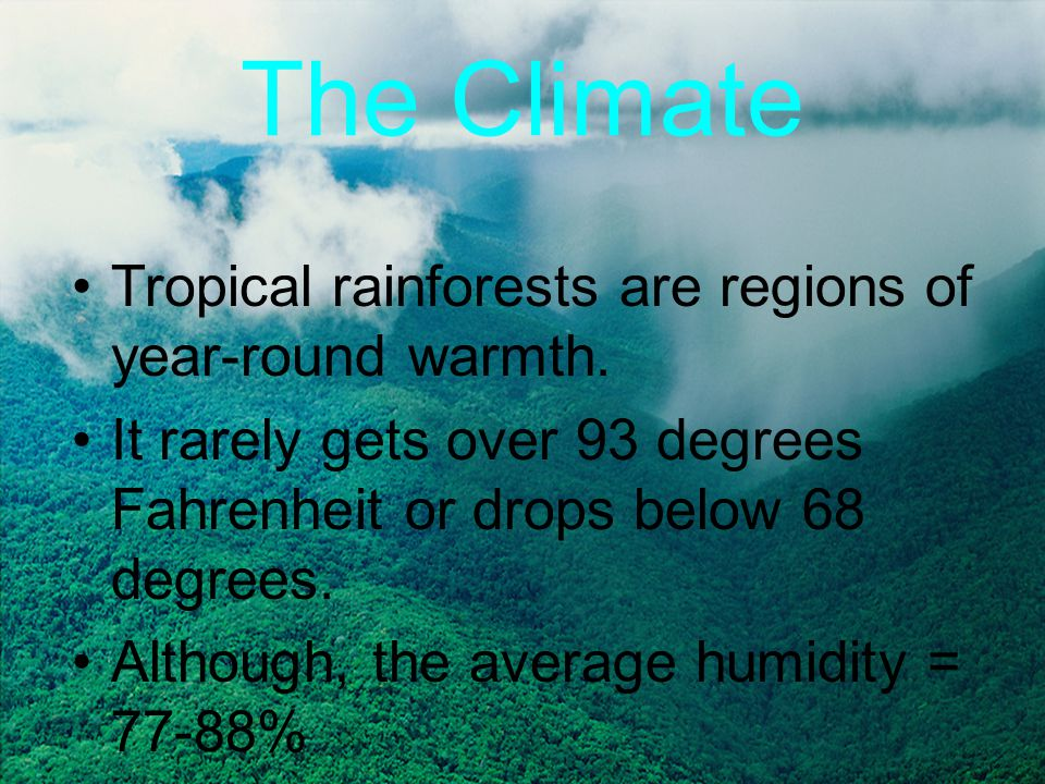 Temperate Rainforests Found near coastal areas rather than tropics Thus, not as hot/humid as tropical About 10,000 years old, while tropical = millions of years old
