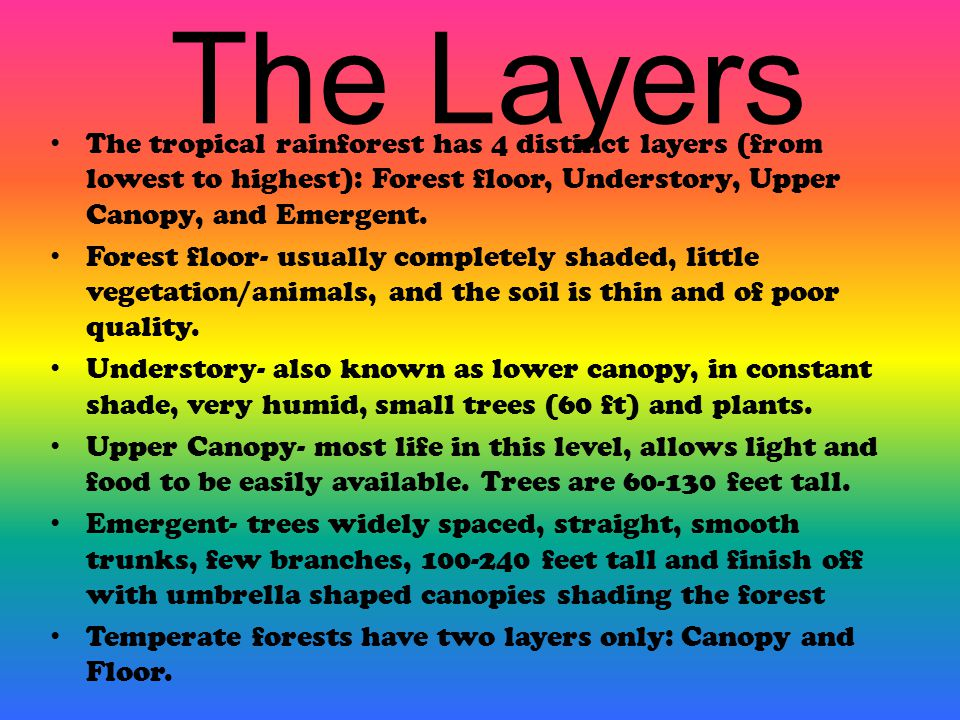 The Layers The tropical rainforest has 4 distinct layers (from lowest to highest): Forest floor, Understory, Upper Canopy, and Emergent.