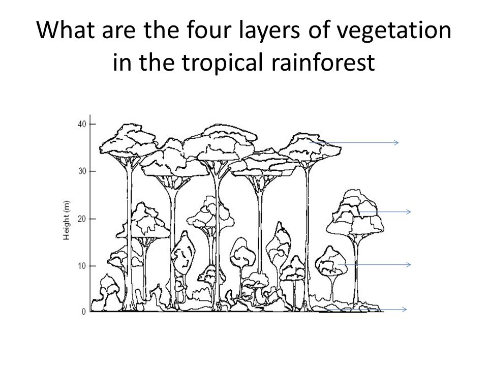 What are the four layers of vegetation in the tropical rainforest