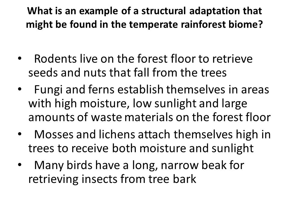 What is an example of a structural adaptation that might be found in the temperate rainforest biome? Rodents live on the forest floor to retrieve seed