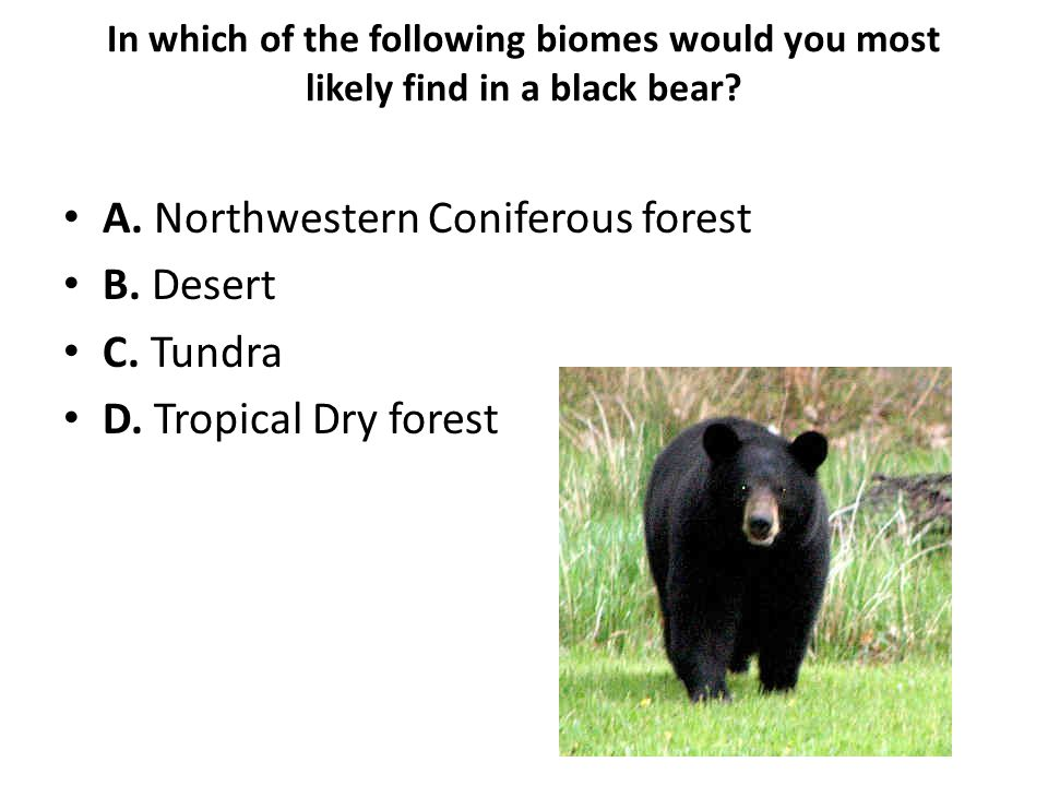 Which of the following plants would you most likely find in a Desert.
